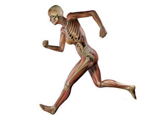 Wissenswertes zum Thema Knochen, Gelenke & Muskeln