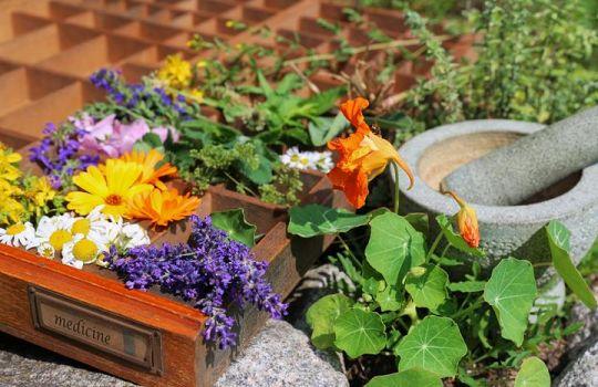 Mit Spaß Und Erfolg Heilkräuter Selbst Anpflanzen